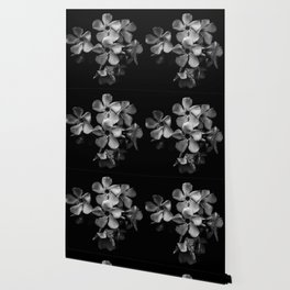 Oleander flowers in black and white Wallpaper