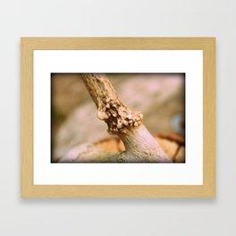 Antler and Bone Framed Art Print