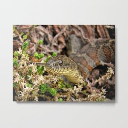A Snake In The Moss Metal Print