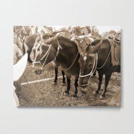 Donkeys in Santorini Metal Print