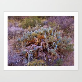 Lifecycle of Prickly Pear Cactuses Art Print