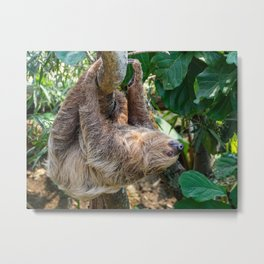 Sloth. Metal Print