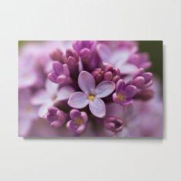 May Lilacs, 5 Metal Print