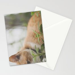 Half a Cat Stationery Cards