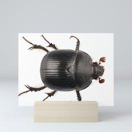 earth-boring dung beetle species Mini Art Print
