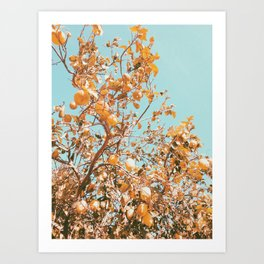 Golden Lemon Tree Photo Art Print