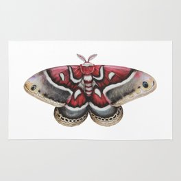 Moth - HYALOPHORA GLOVERI - Glover's silk moth | Painting | Watercolour | Insect Rug