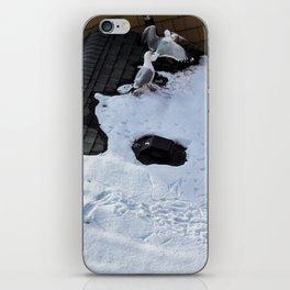 Brawling Gulls (2) iPhone Skin