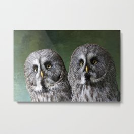 Great Grey Owls Metal Print