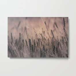 Barley-Pink Metal Print