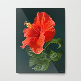 Red Darling Hibiscus Metal Print