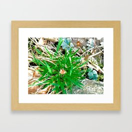 Wildflower 1 Framed Art Print