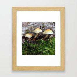 Forest Mushrooms Framed Art Print