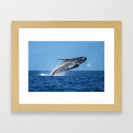 Humpback Breach 13 Framed Art Print
