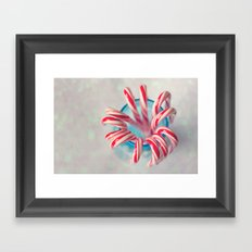 Happy Holidays, Christmas and Winter Photography, Candy Cane Framed Art Print