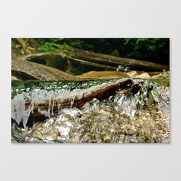 In My Element Canvas Print