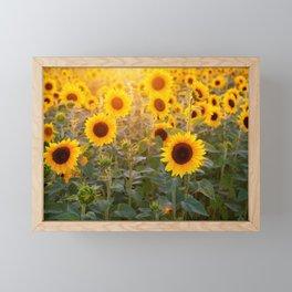 Sunlit Sunflowers Framed Mini Art Print