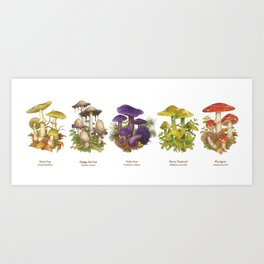 Illustrated Mushrooms Art Print