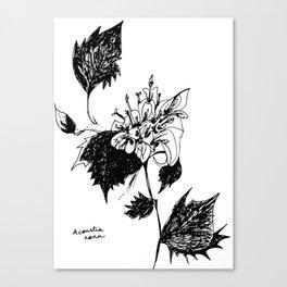 Acourtia nana Canvas Print