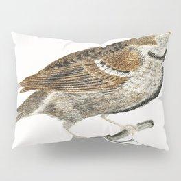A Sparrow by Johan Teyler (1648-1709) Pillow Sham