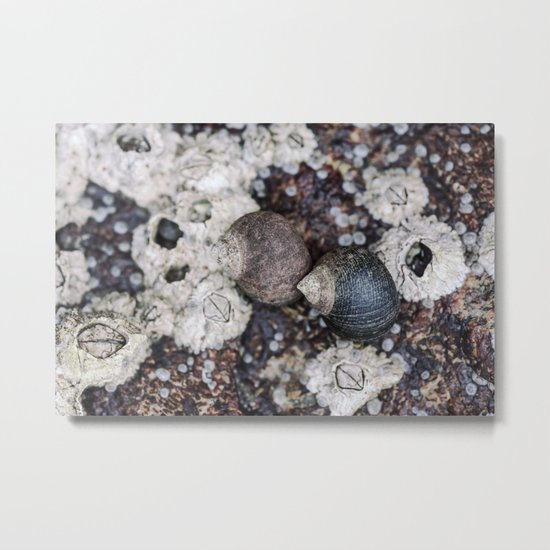 Periwinkles and Barnacles on a rock Metal Print