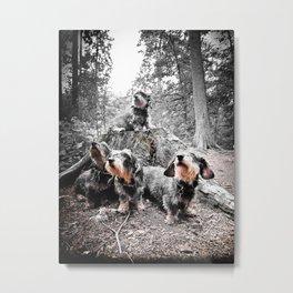 DACKEL DOG #40 Metal Print