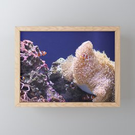 Finding Nemo in Seattle Framed Mini Art Print