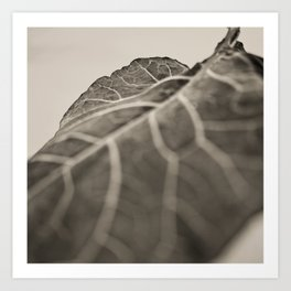 The Collard, Green Art Print