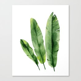Banana Leaves. Watercolor illustration on white. Canvas Print