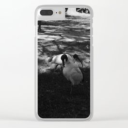 Garbage birds of Australia Clear iPhone Case