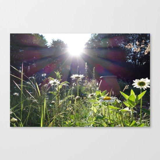 Evening light Canvas Print