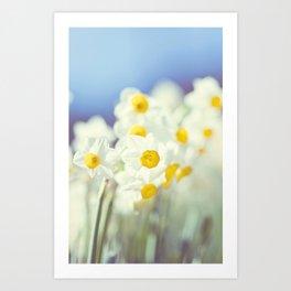 Daffy flowers Art Print