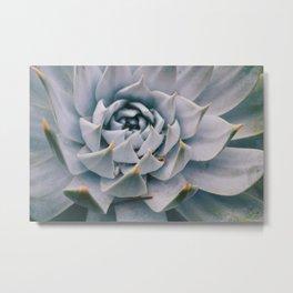 Pale Succulent Center Metal Print