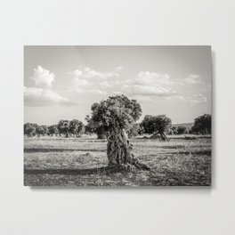 Olive trees in the countryside near the medieval white village of Ostuni Metal Print