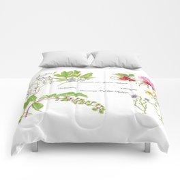 Chatham Summer Morris Island Comforters