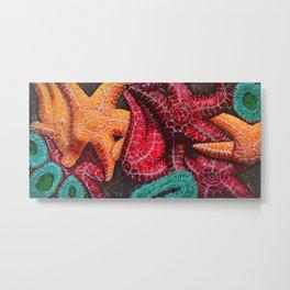 Starfish and Anenome Metal Print