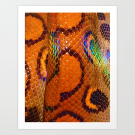 Rainbow Boa Art Print
