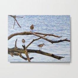 12. Threebird Metal Print