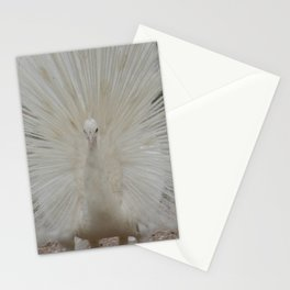 SHOWING OFF IN WHITE Stationery Cards