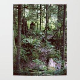 Vancouver Island Rainforest Poster