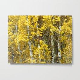 Birch Fall Metal Print