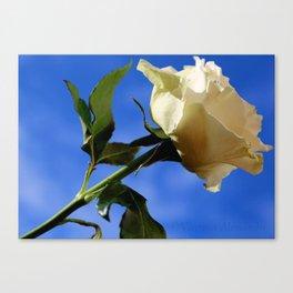 rosa nel blu Canvas Print