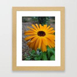 Orange Flower Side Framed Art Print