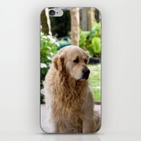 lucas david iPhone & iPod Skins featuring Lucas by Rafael Andres Badell Grau