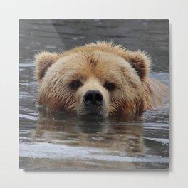 Bear20150803 Metal Print