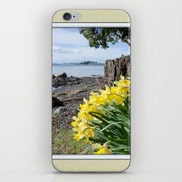 DAFFODILS OF SPRING IN THE SAN JUAN ISLANDS iPhone Skin