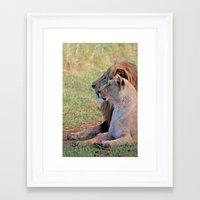 lions Framed Art Prints featuring Lions by Jessica Krzywicki