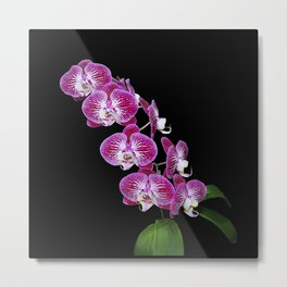 Richly colored spray of orchid flowers Metal Print