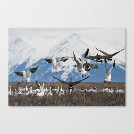 Scattering Geese Canvas Print