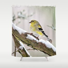 Balancing Act (American Goldfinch) Shower Curtain